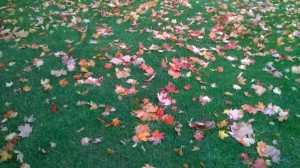 Why clean up leaves?